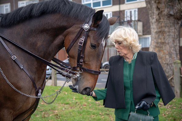 Camilla next to a police horse on January 23, 2019 in London, England | Photo: Getty Images