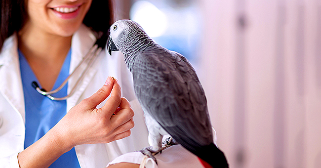Daily Joke: A Woman Takes Her Gravely Ill Bird to the Vet