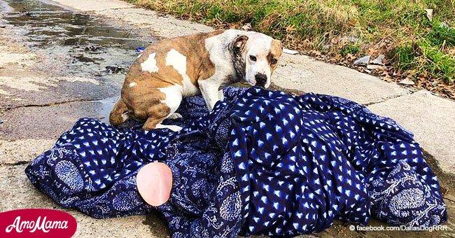 Ein Hund, der in einer dreckigen Nachbarschaft ausgesetzt wurde, wollte seine Decke nicht verlassen
