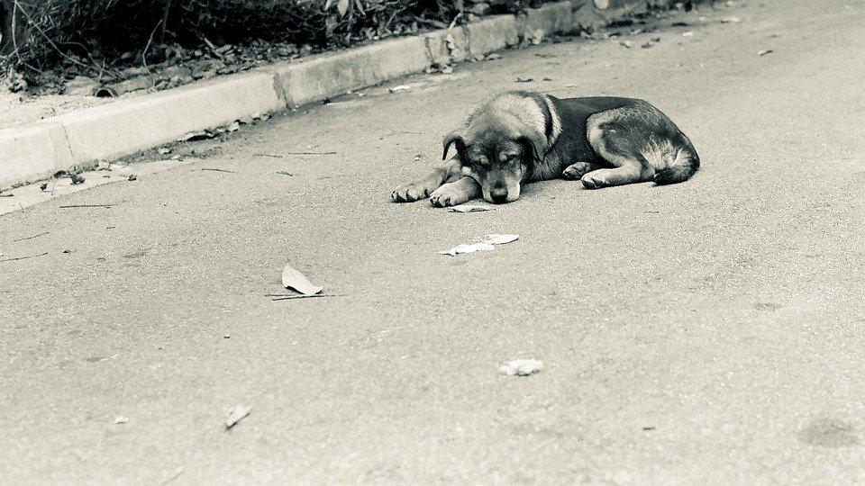 Un chien abandonné | photo : Pixabay