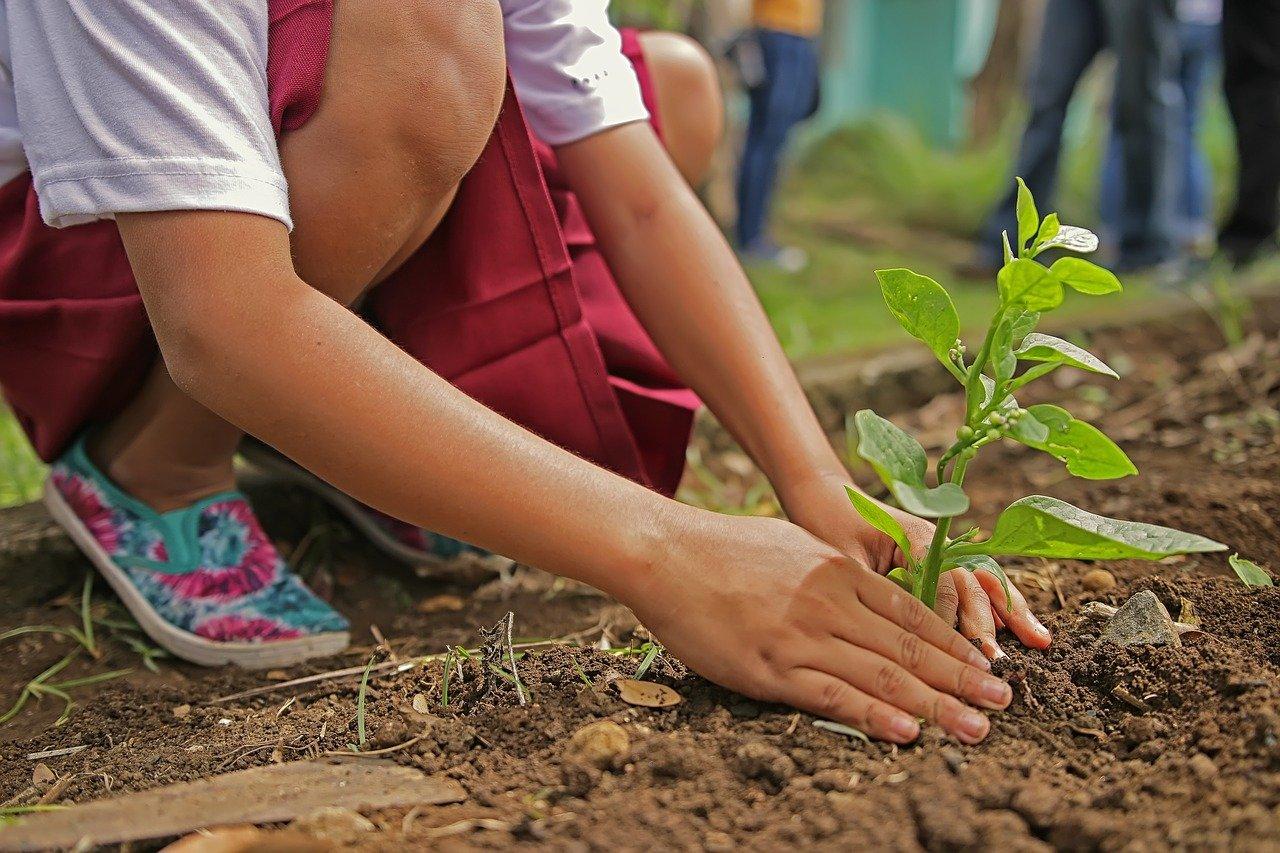 Un enfant qui plante un arbre. | Photo : Pixabay
