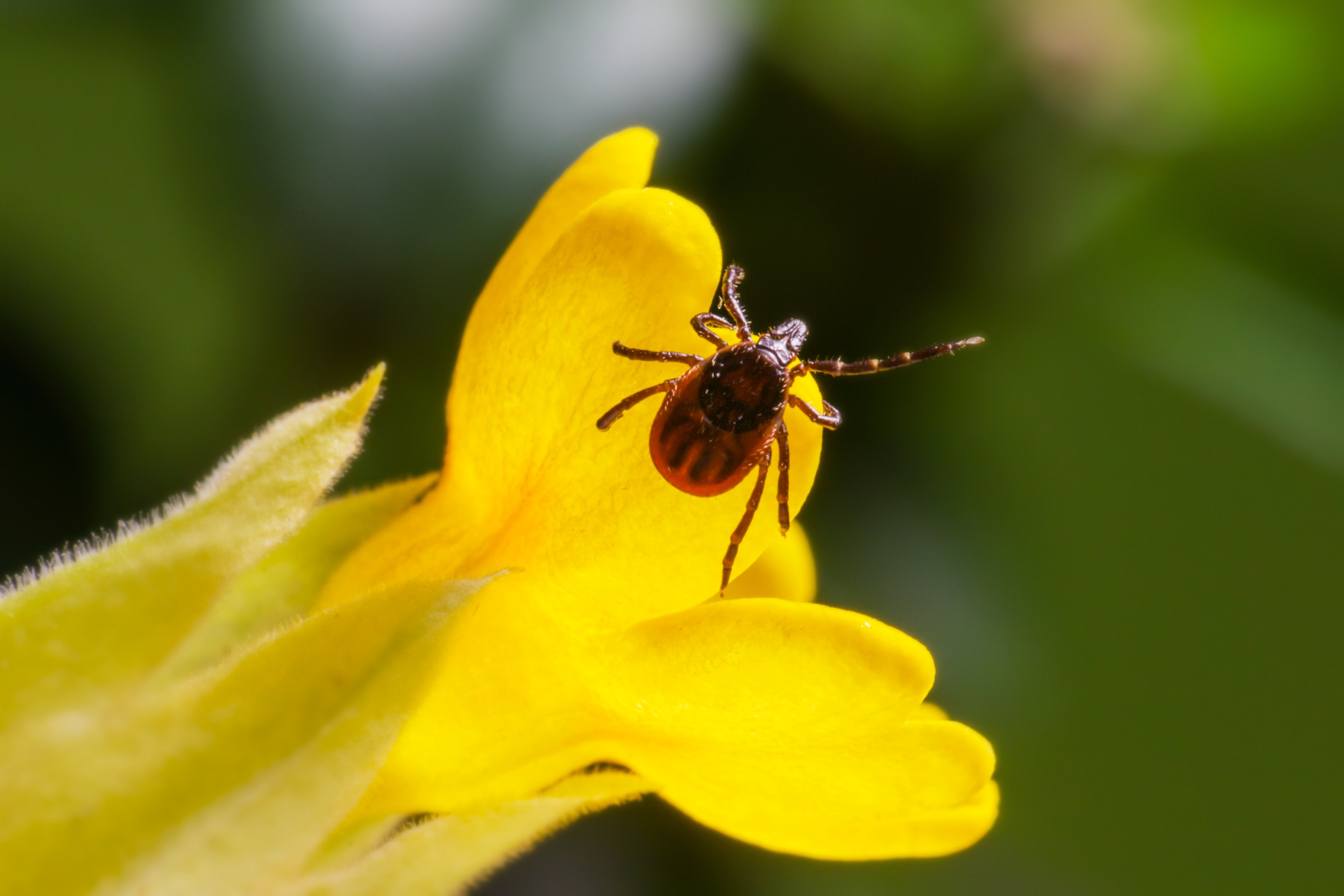 Pictured - A macro photography of insect in yellow flower | Source: Pexels