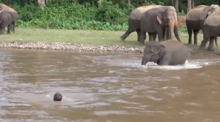 Source Youtube/Elephantnews