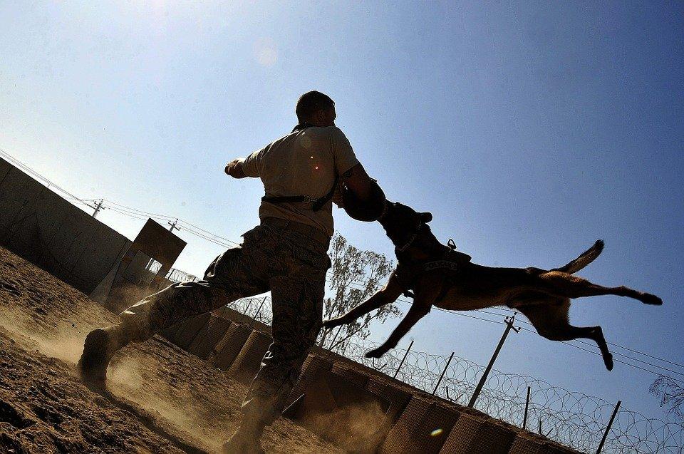 Schäferhund beim Schutztraining | Quelle: Pixabay