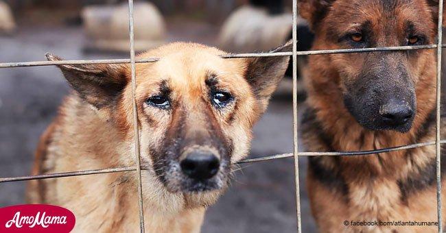"""Casi 200 perros enjaulados fueron salvados tras ser hallados """"pidiendo"""" libertad"""