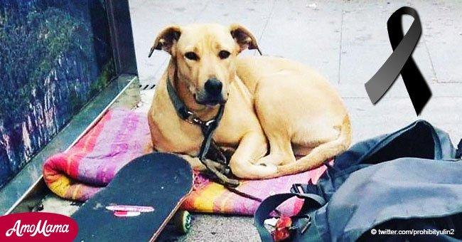 Le scandale après qu'un policier ait tiré sur le chien d'un sans-abri en public à Barcelone