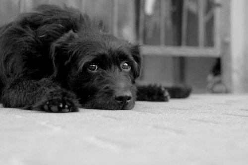 Chien noir aux yeux triste | source : Shutterstock