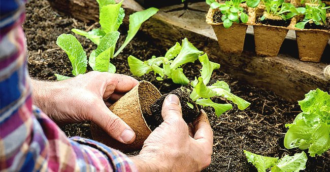 Tips and Ideas for Overwintering Your Garden Plants