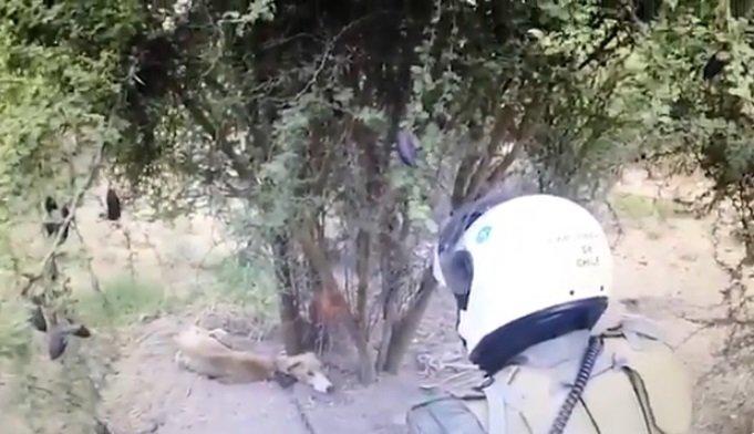 Funcionarios de la policía encontró a un galgo desnutrido amarrado a un árbol. |  Foto: Twitter/Carabineros de Chile