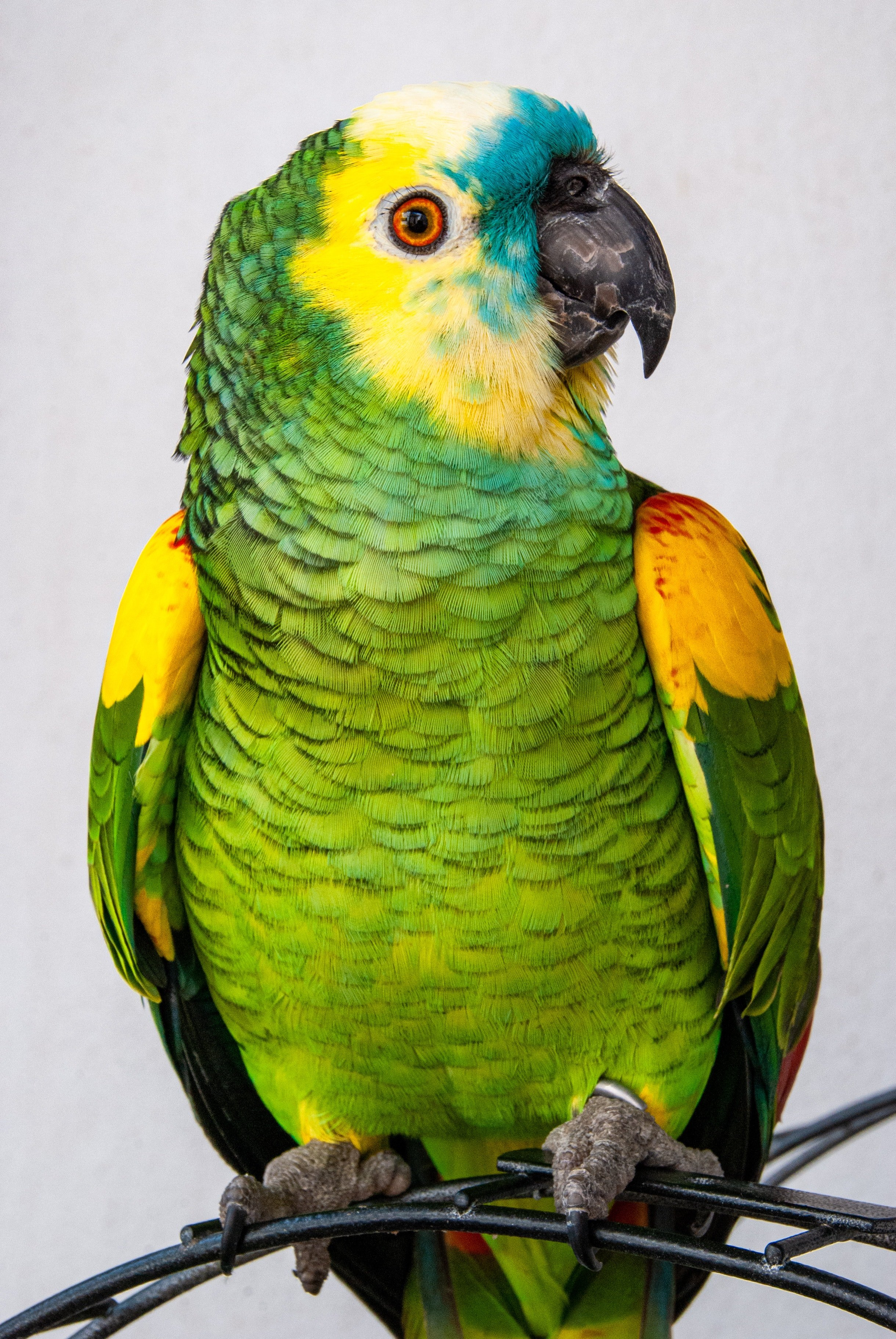 Photo of a colorful parrot. | Photo: Pexels