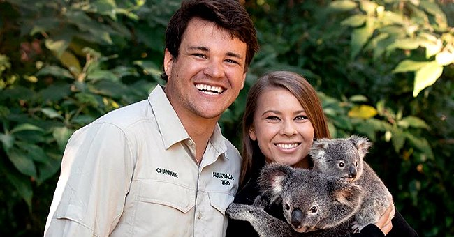 Bindi Irwin and Her Husband Chandler Powell Pose with Koala Showing How They Spend Time Together