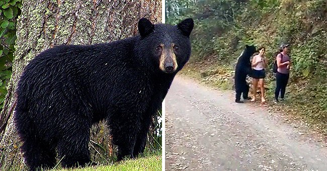 Watch This Terrifying Encounter of a Brave Woman and a Wild Bear – Look What She Does
