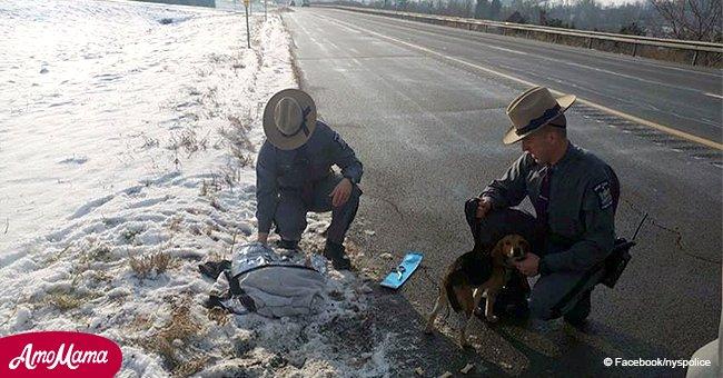 Chofer de camión rescata a perritos brutalmente arrojados de vehículo en autopista de NY