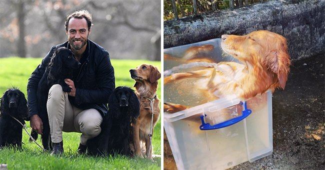 Kate Middleton's Brother James Shares Funny Video Showing How He Cools down His Dog Mabel