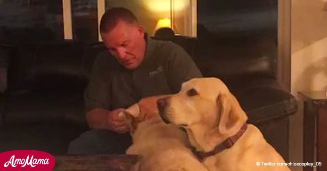 Dog gets jealous of other dog's ear medicine and tries to get some for himself