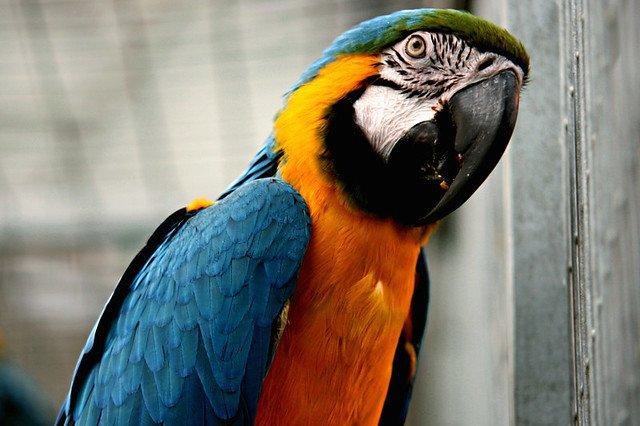 Un magnifique perroquet. l Source: Flickr