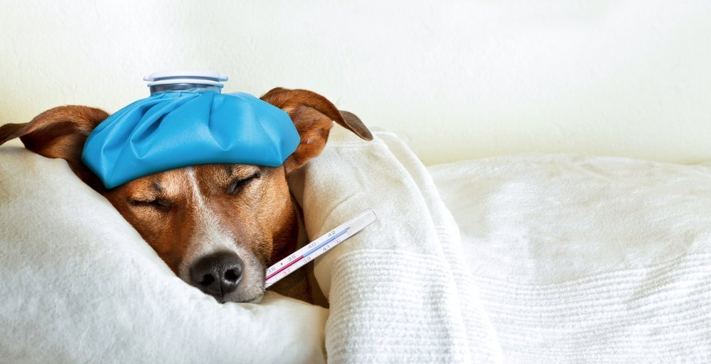 A sick dog sleeping in bed. | Photo: Shutterstock