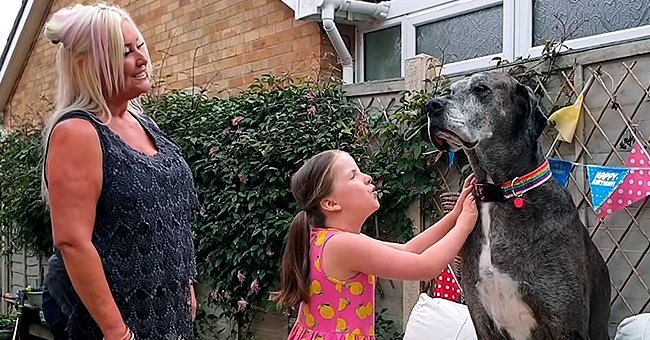 World's Tallest Dog Is Now the Oldest Living Great Dane