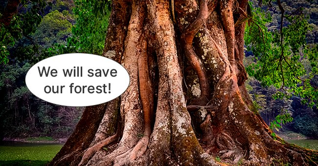 The wise old tree was determined to save the forest along with the animals.   Photo: Shutterstock