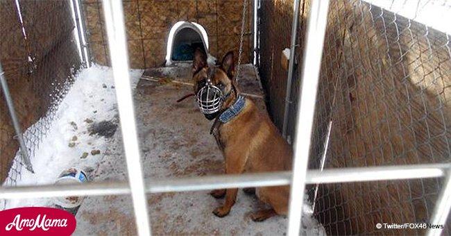 Ce chien a été retrouvé enchaîné à l'extérieur, souffrant dans le tourbillon polaire mortel ; le propriétaire inculpé