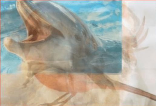 El delfín entre los animales. | Imagen: YouTube / Lo Mas Trending