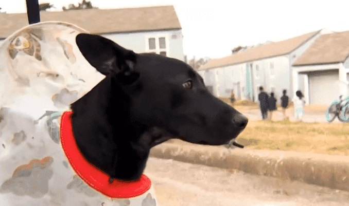 Gunman Shot Family's 9-Month-Old Puppy in the Face in Front of