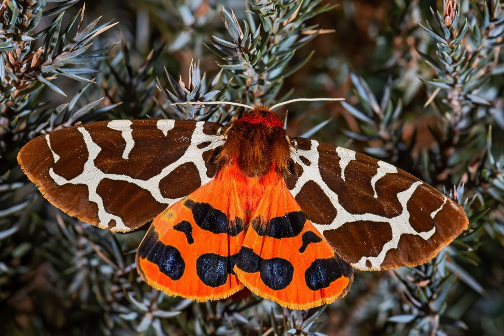 A photo of a colorful moth   Photo: Shutterstock