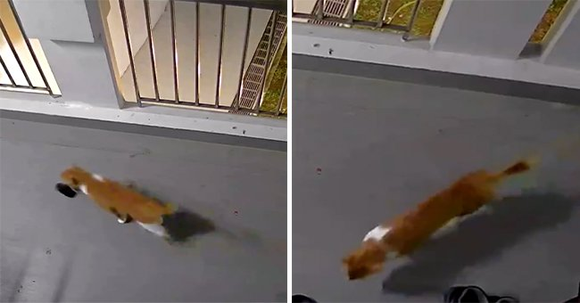 This Cat Had Some Fun with the Neighbors — He Stole a Slipper from Their Doorstep 4 Times