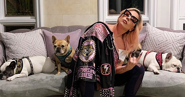 Witness to Armed Robbery Involving Lady Gaga's Dogs & Ryan Fisher Recalls the Devastating Event