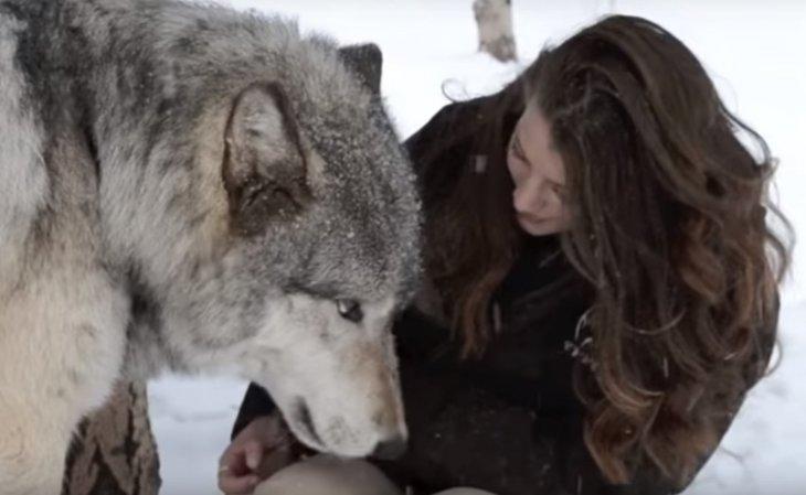 Quelle: YouTube/ColoradoWolf&WildlifeCenter