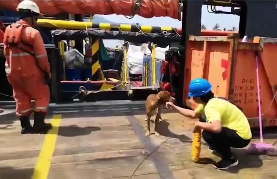 Mujer acariciando al perro después de ser rescatado. | Imagen: YouTube/Viral Press