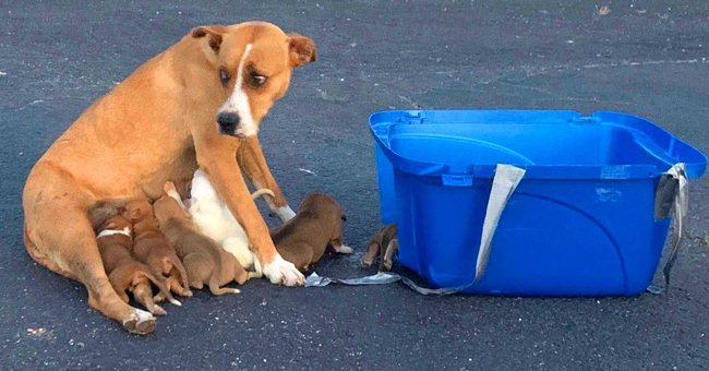 An abandoned dog with her 9 puppies. │ Source:  facebook.com/pawangelone