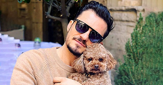Pregnant Katy Perry and Fiancé Orlando Bloom's Beloved Dog Mighty Is Missing