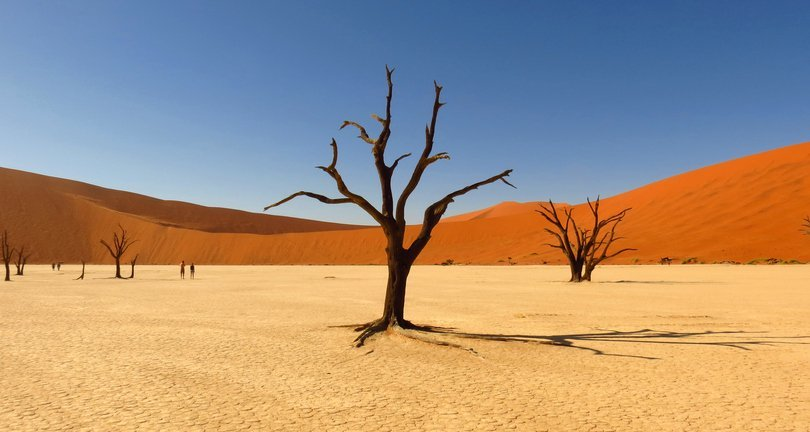 Bare Trees On Sand Dune Against Clear Sky   Photo: Getty Images