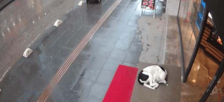 Un chien errant s'abritant de la pluie sous l'auvent d'un magasin. l Source: Facebook/Boran Karahan