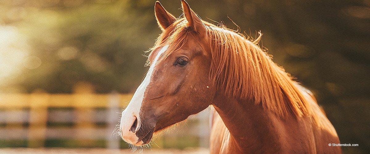 Pferd wird auf grausame Weise bei hoher Geschwindigkeit auf Pickup transportiert (Video)