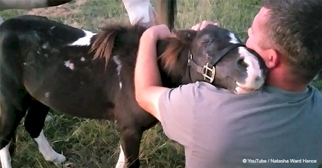 Man saved horse from death, so little animal gives incredible 'thank you' to his savior