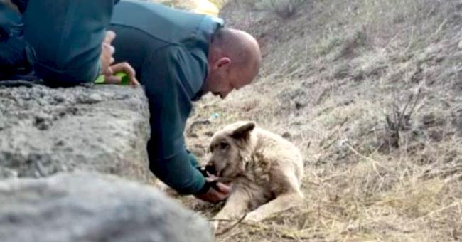 Incendio de Gran Canaria: bomberos y la Guardia Civil salvaron a varios perros (video)