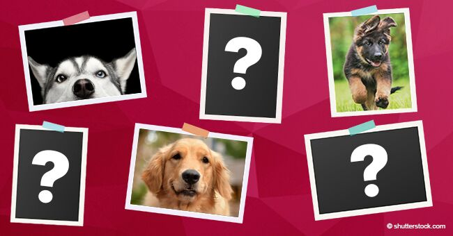 Voici les 10 plus belles races de chiens dans le monde