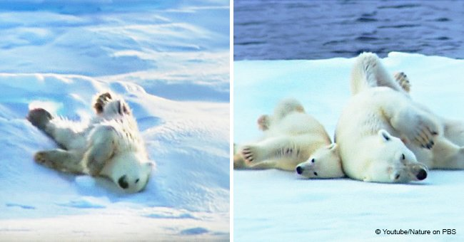 Video of mama polar bear and her cubs drying off after a swim continues to warm hearts