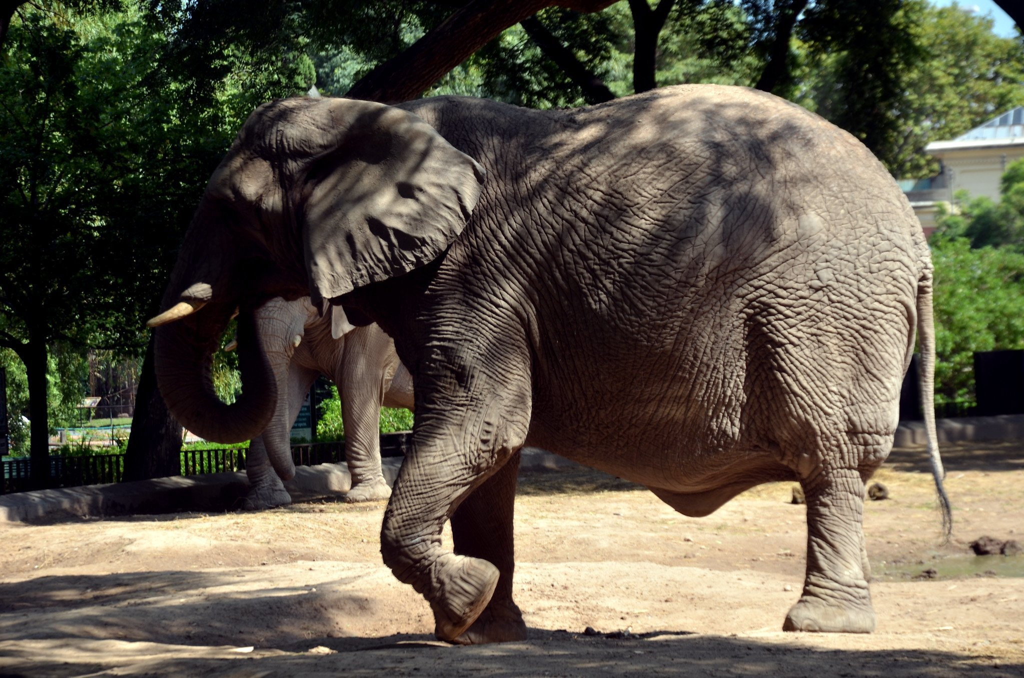 Elefant | Quelle: Flickr