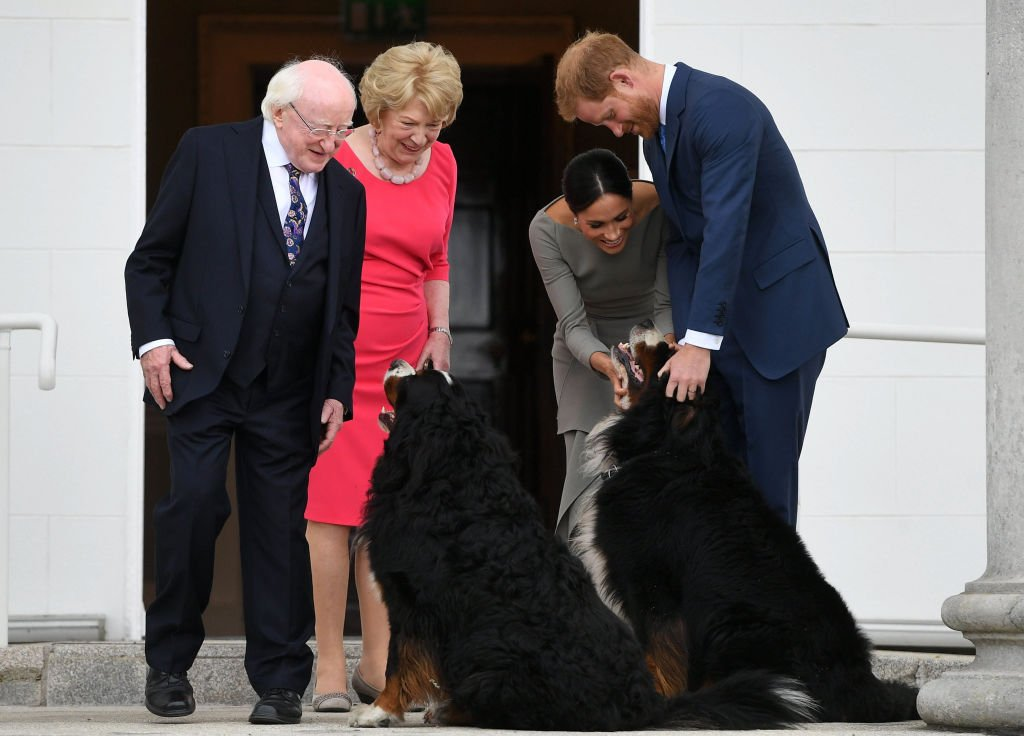 Prince Harry and Meghan Markle pet Bernese Mountain dogs, Brod and Sioda during a visit with Ireland's President Michael Higgins and his wife Sabina Higgins at Aras an Uachtarain on July 11, 2018 in Dublin, Ireland   Source: Getty Images (Photo by Pool/Samir Hussein/WireImage)