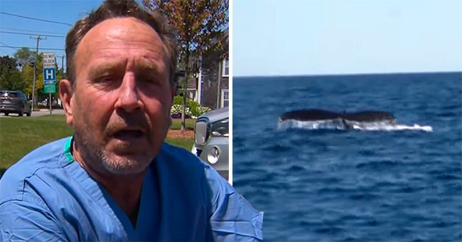 Diver Details Surreal Experience of Surviving a Whale's Jaws
