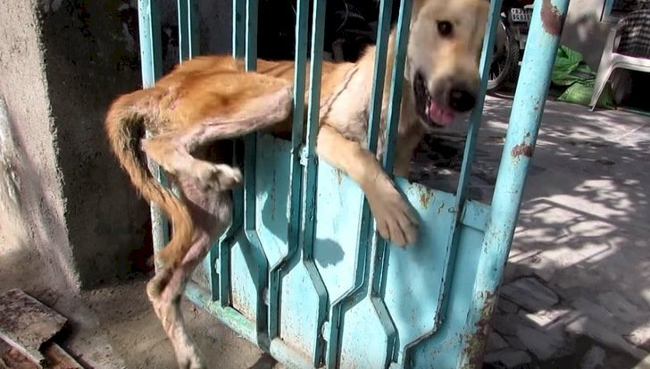 Un chien coincé dans les barreaux d'une porte.   Photo : YouTube/Nieves White