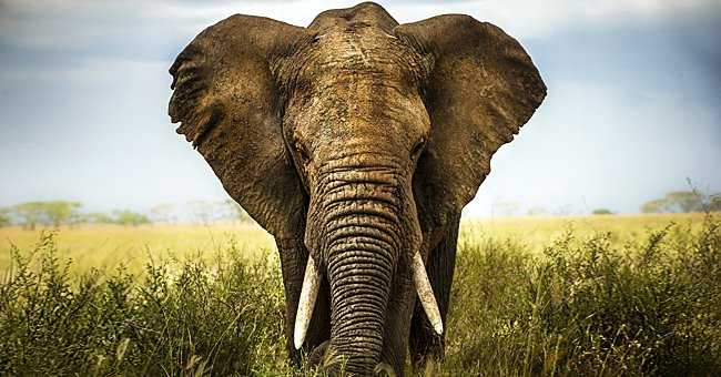 Daily Parable: A Lonely Elephant Walked through the Forest