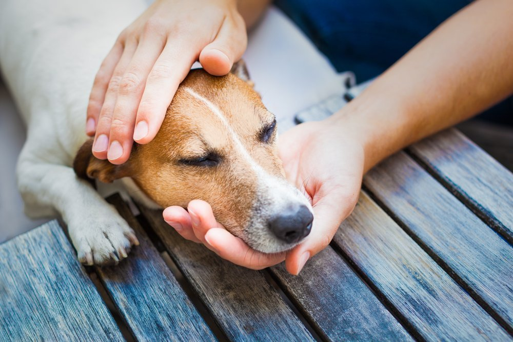 An owner petting his sick dog while he is resting. | Photo: Shutterstock
