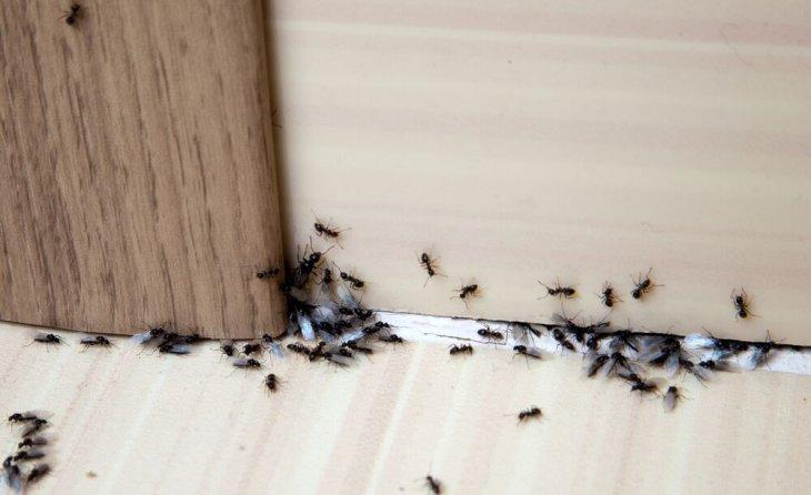 Naturliche Tipps Gegen Ameisen Im Haus