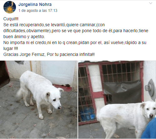 Publicación de Jorgelina Nohra.  Imagen: Facebook/ Grupo MASCOTAS PERDIDAS!! CR (chubut)