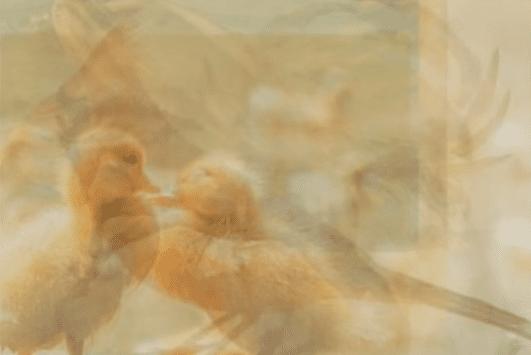 Los patos entre los animales. | Imagen: YouTube / Lo Mas Trending