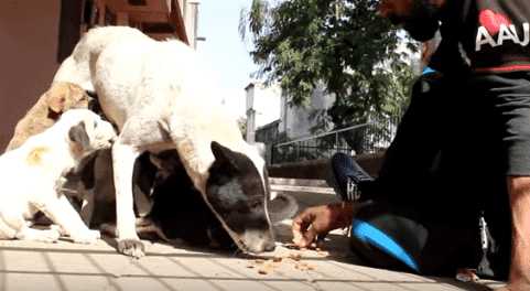 Familie des Welpen | Quelle: YouTube / Animal Aid Unlimited, India